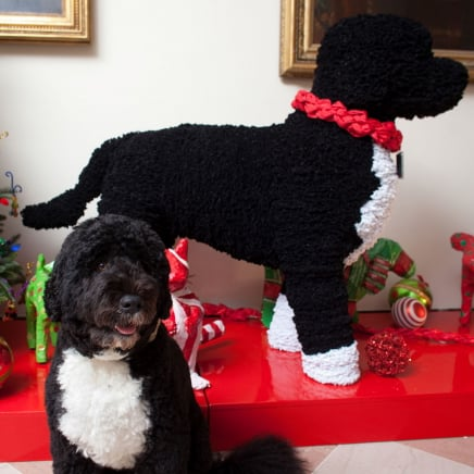 Photos of White House Pets Celebrating the Holidays Through the Years