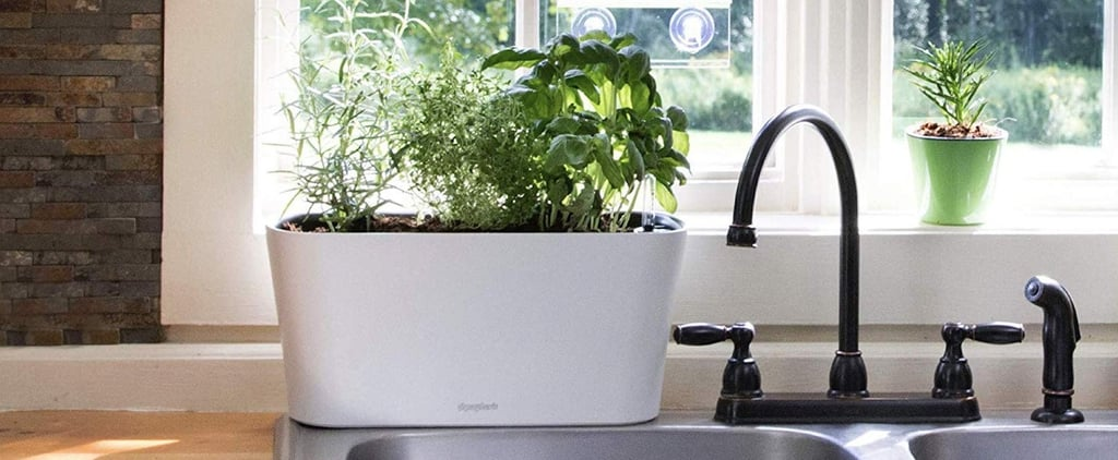 Internet Famous Plant Products