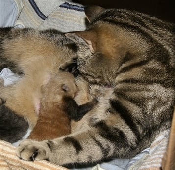 Baby Red Panda Dies, Mama Cat's Kittens Survive