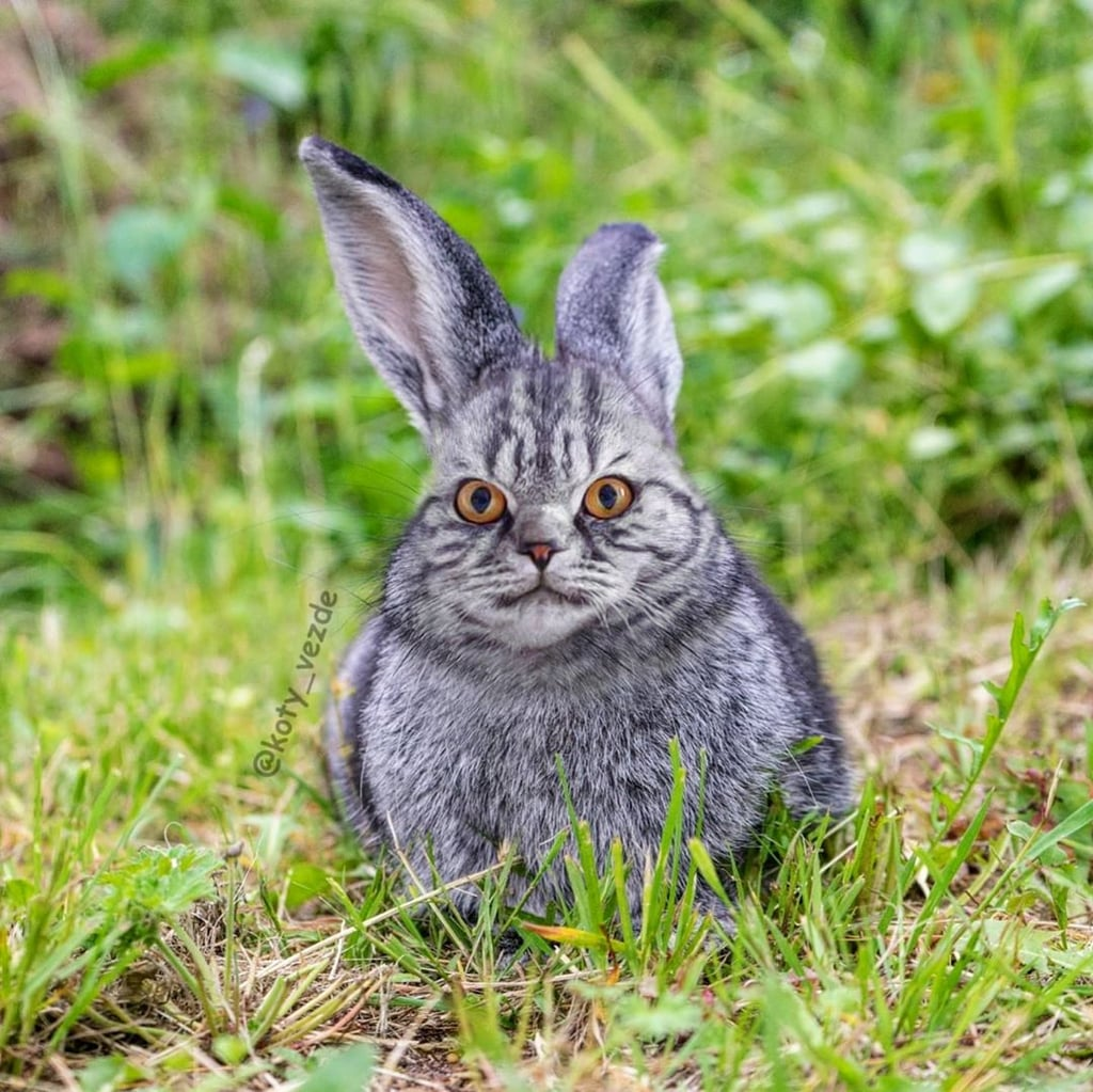 Bunny With a Cat's Face