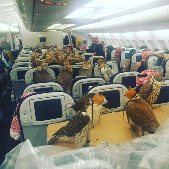 Falcons Take Over Majority Plane Seats on Middle East Flight