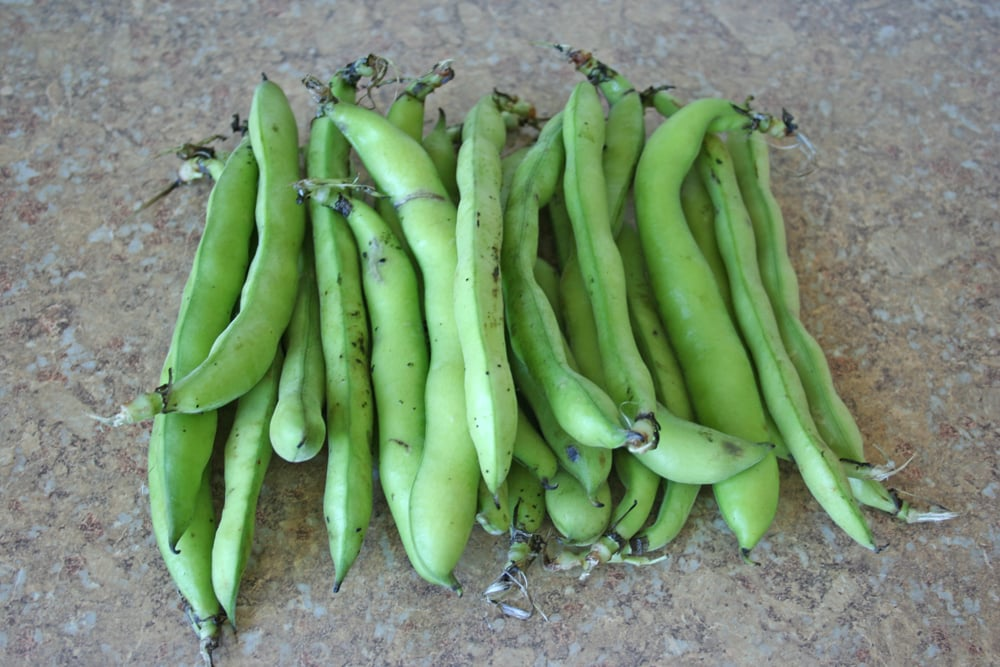 The Spring Food: Fava Beans