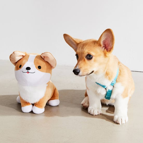Best Corgi Gifts