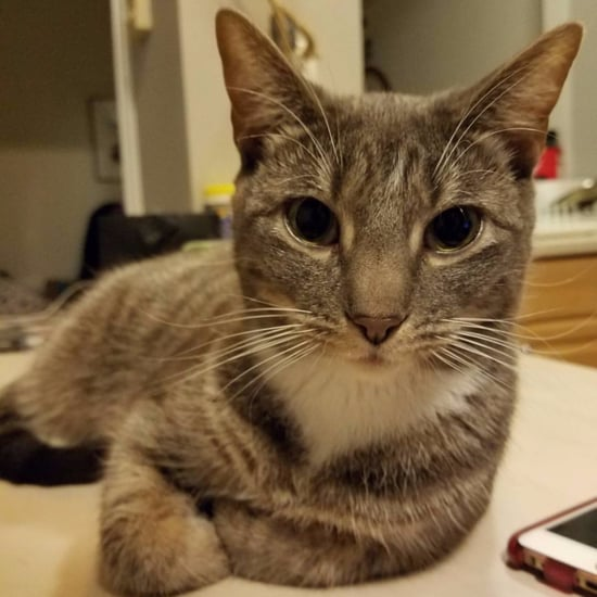 2017 Study Says Cats Are as Smart as Dogs