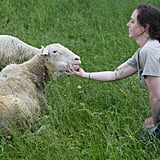 The sheep love chin scratches!