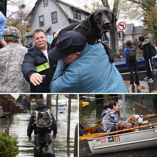 Hurricane Sandy Dogs | Pictures