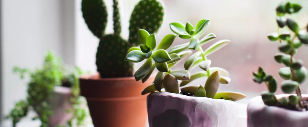 The 2 Major Reasons Your Succulents Keep Dying