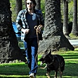 Ben Affleck took his German Shepherd on a walk in Brentwood in January 2012.