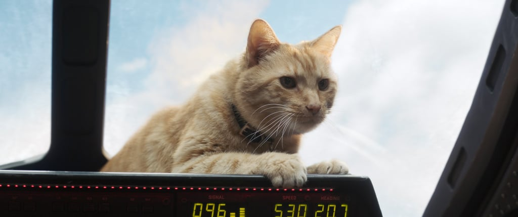 Memes and Reactions About Goose the Cat in Captain Marvel