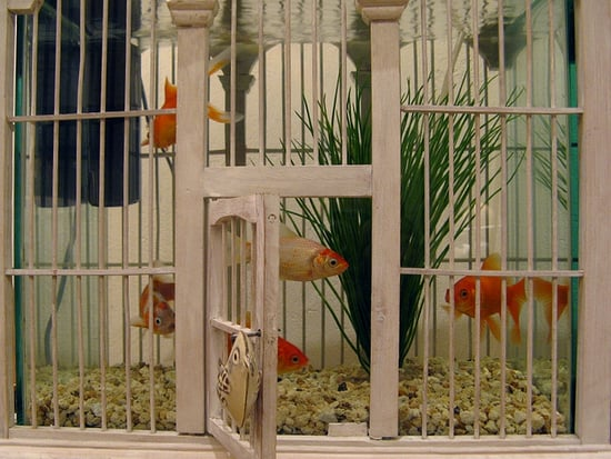 11 Alternative Uses For Birdcages