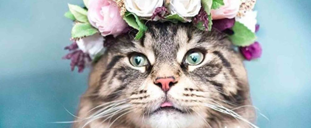 Photos of Cats With Floral Crowns