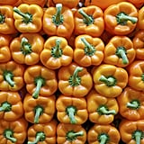 Buy Organic: Sweet Bell Peppers