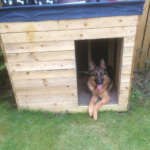 A pet shed is even better than a crate.