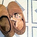 """""""Ummm someone stole my shoe . . ."""" Source: Imgur user deckpumps_n_deldos"""