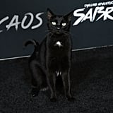 Salem the Cat on Sabrina Netflix Red Carpet Photos 2018