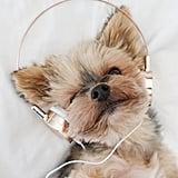 Forever 21 Rose-Tone On-Ear Headphones