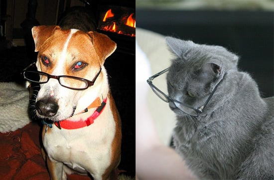 Study Shows Dogs Are Smarter Than Cats at Oxford University and Dogs Have Bigger Brains