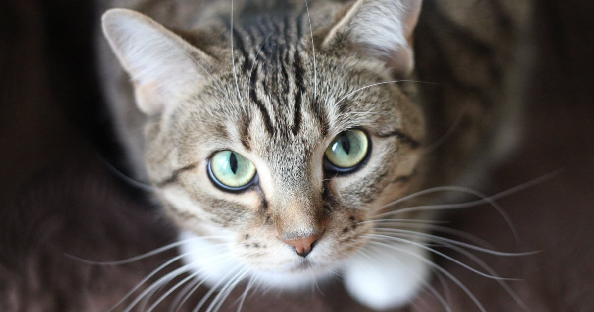 Why Do My Cat S Eyes Glow In Photographs Popsugar Uk Pets