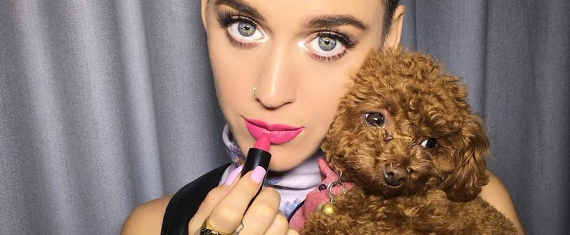 25 Celebrities Who Are Obsessed With Their Dogs