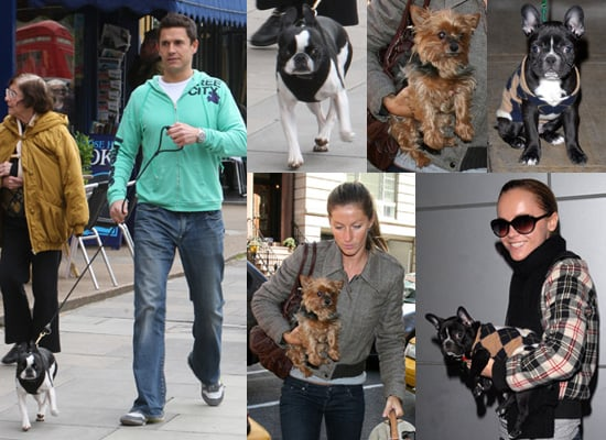 Pop Poll on Your Favourite Dog out of Jeremy Edwards' Molly, Christina Ricci's Ramon and Gisele Bundchen's furry friend