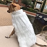 Game of Thrones Inspired Daenerys Targaryen Cape For Cats or Dogs