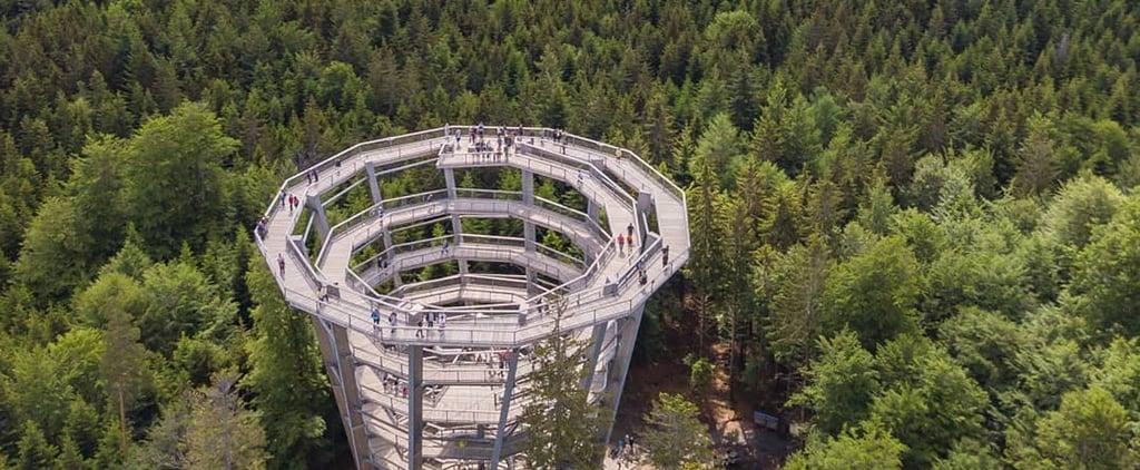 Treetop Slide in Germany | Baumwipfelpfad Schwarzwald