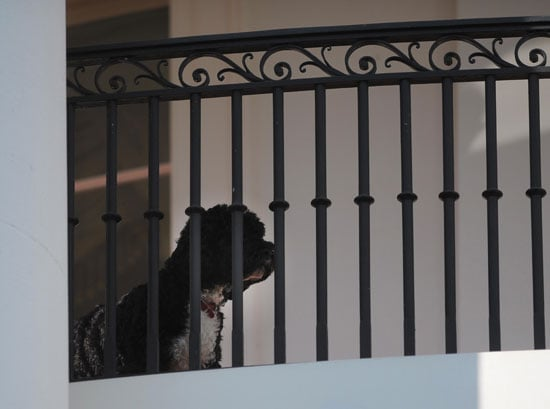 New Picture of President Barack Obama's Dog, Bo