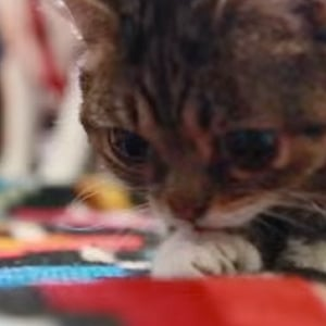 Lil Bub Playing | Video