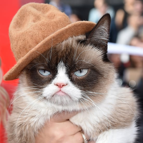 Grumpy Cat at MTV Movie Awards 2014