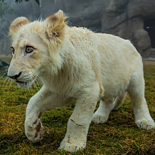 حديقة سفاري دبي تستقبل 175 حيواناً حديث الولادة