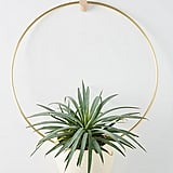 Brass Spora Hanging Planter