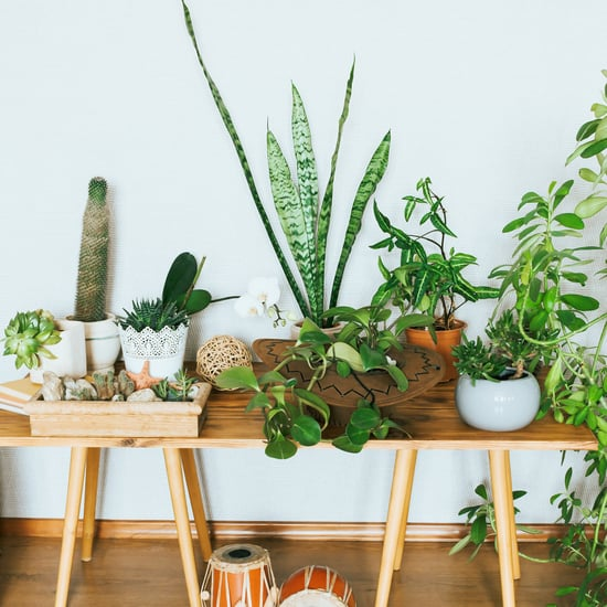 The Best House Plants to Give as Gifts