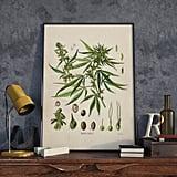 Cannabis Sativa Vintage Print