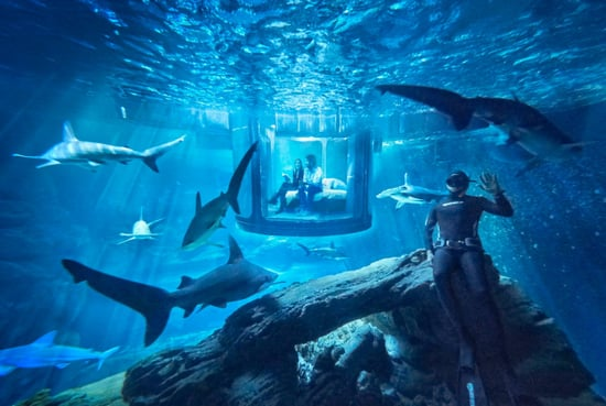 Airbnb Shark Tank Bedroom Let's You Sleep with the Fishes