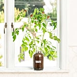 Back to the Roots Organic Tomato Grow Kit
