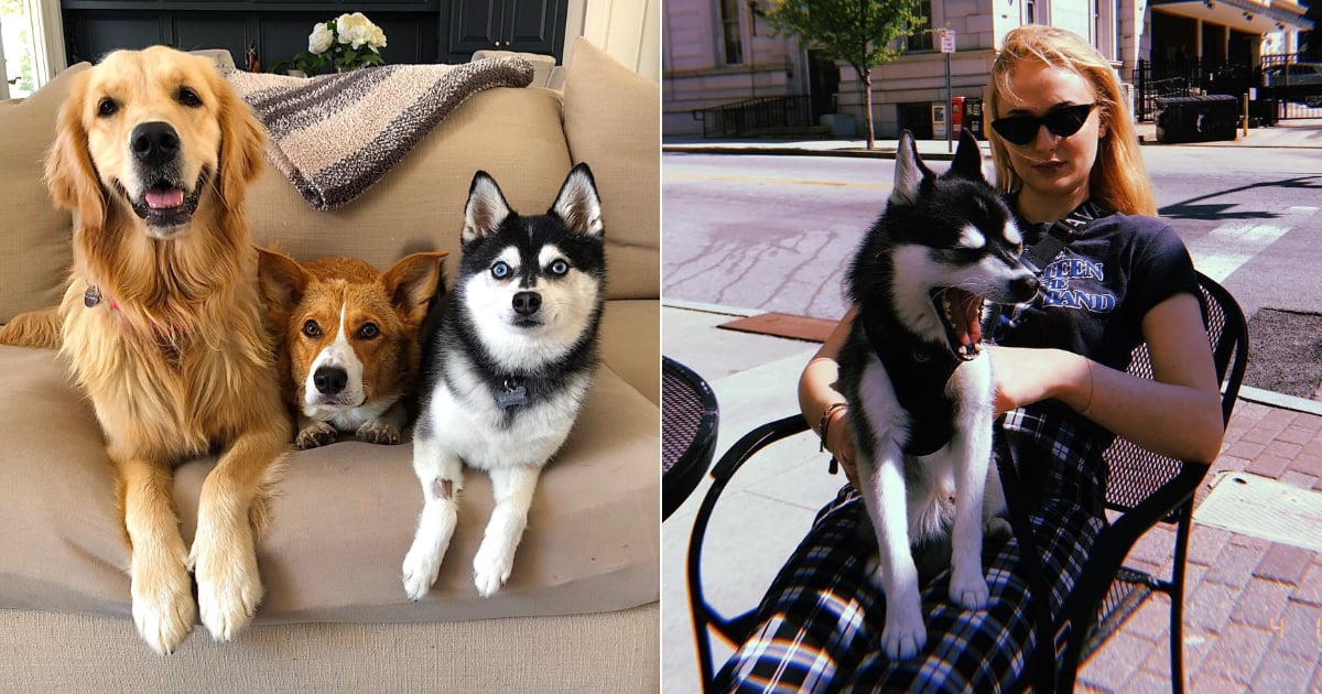 Meet Joe Jonas and Sophie Turner's 3 Fur Babies: An Alaskan Klee Kai, a Golden, and a Corgi