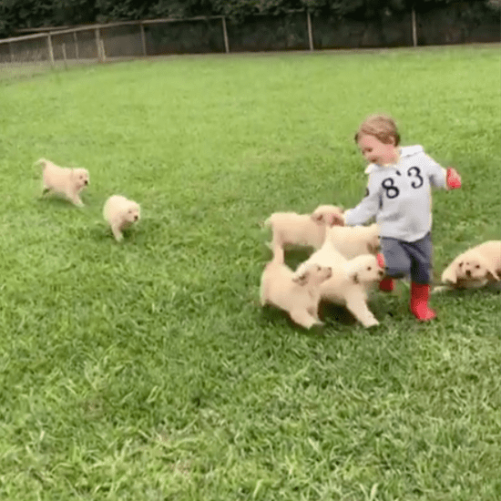 Boy Gets Tackled by Golden Retrievers