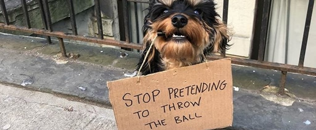 Dog With Sign Is the Canine Version of Dude With Sign Meme