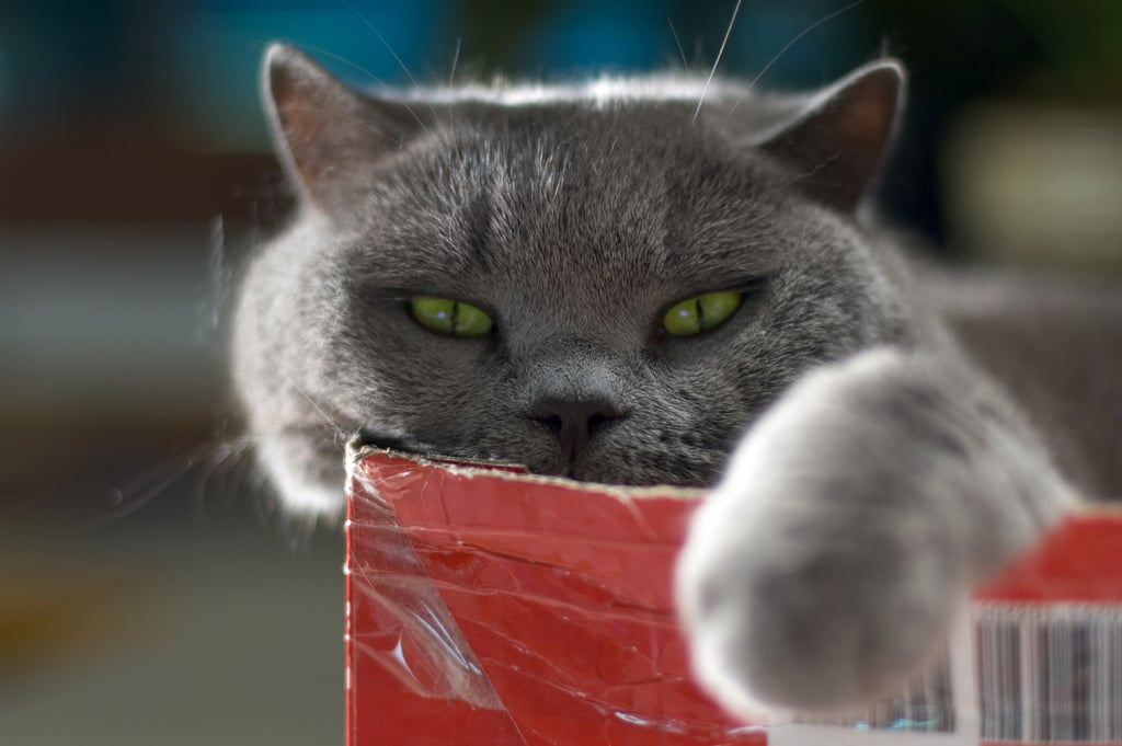 Funny Photos of Evil Cats