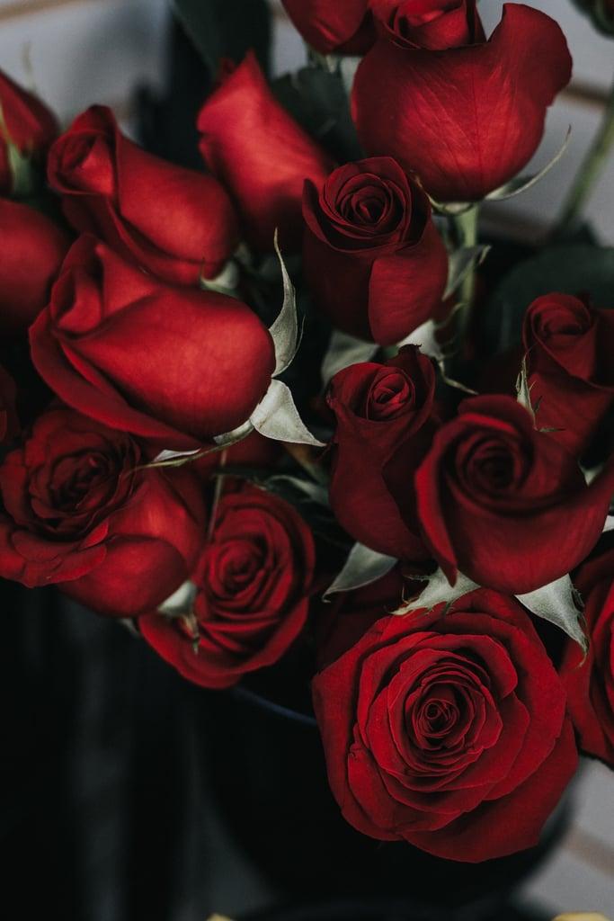 Red Roses iPhone Wallpaper