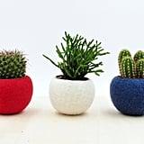 Felt Succulent Planter Collection