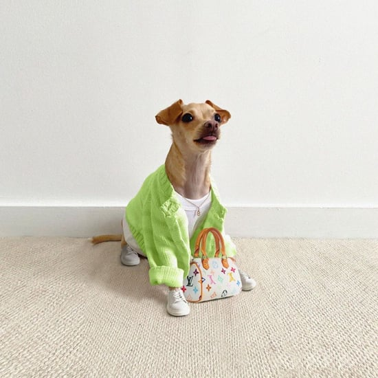Boobie Billie Dog Outfits on Instagram