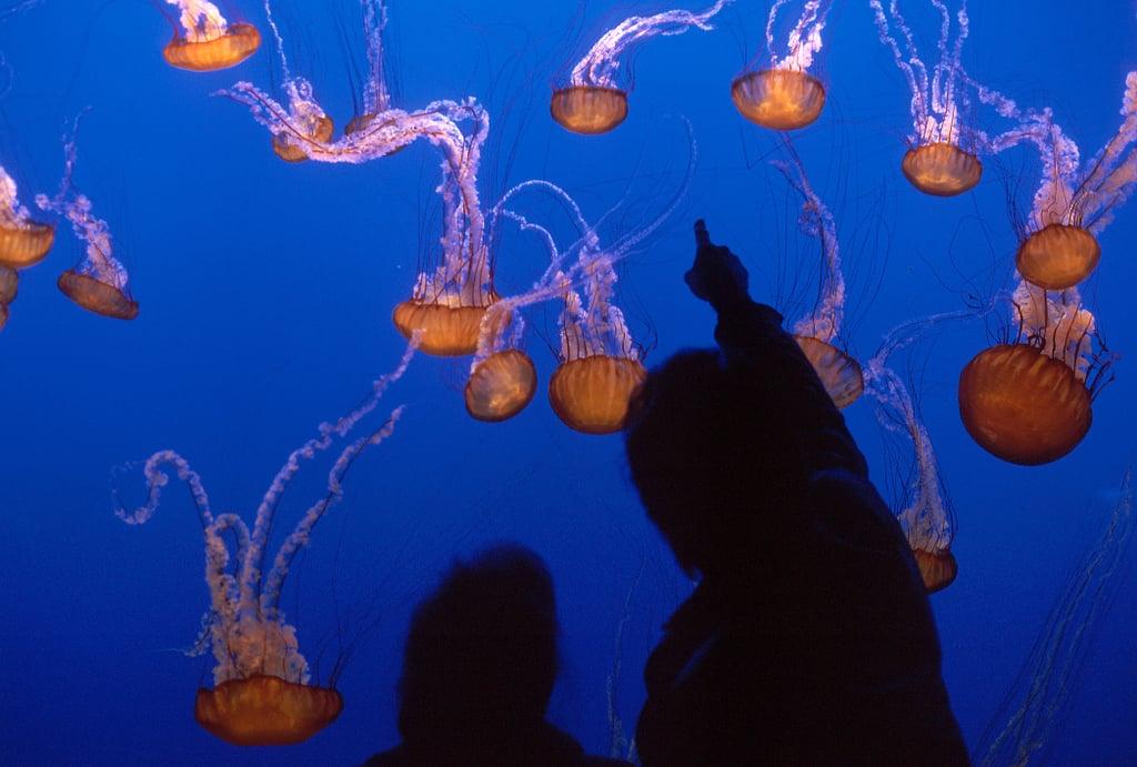 Monterey Bay Aquarium: Monterey, CA