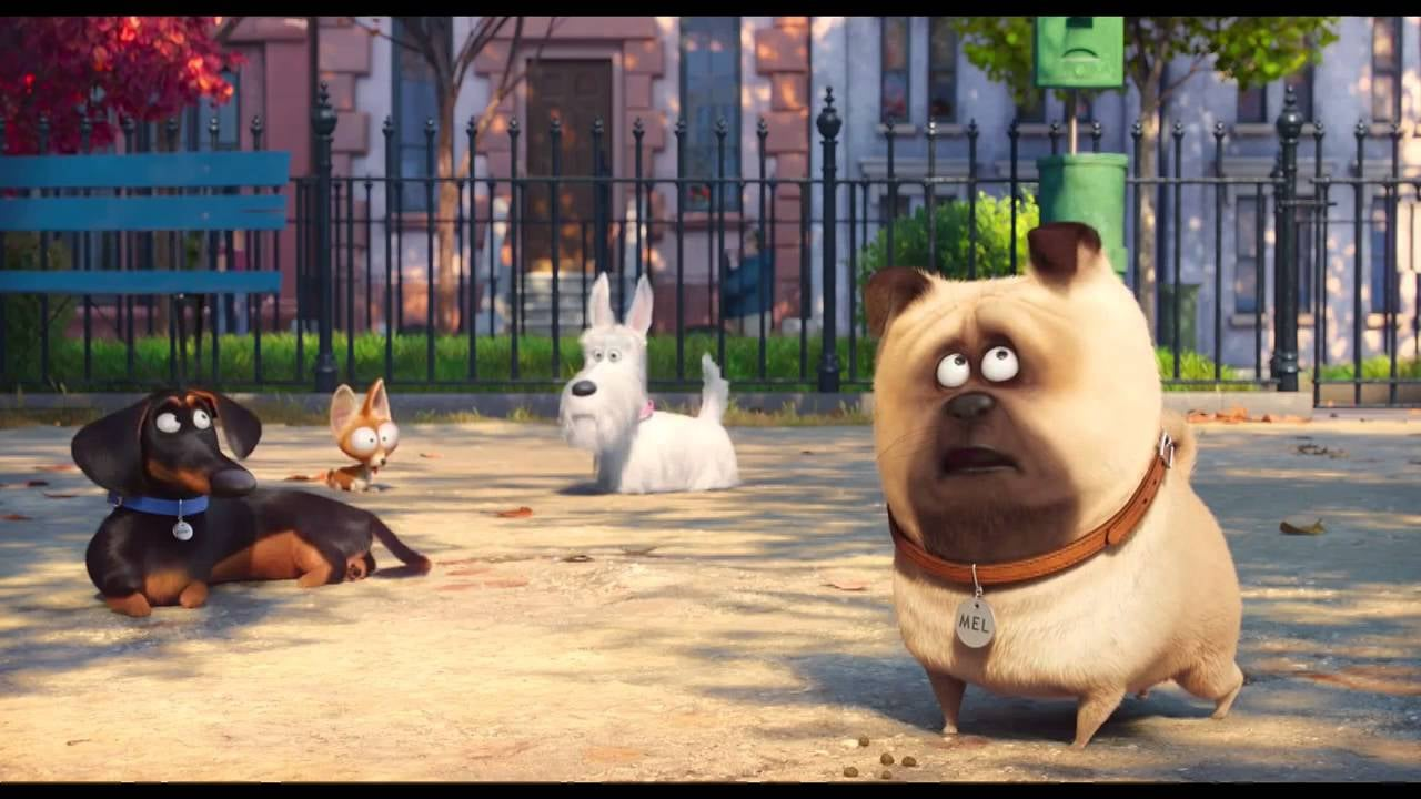 The Secret Life Of Pets 2016 7 Reasons You Have To Take Your Kids To See The Secret Life Of Pets Popsugar Family