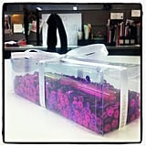 How cute is this? We had a very special delivery from Estee Lauder.