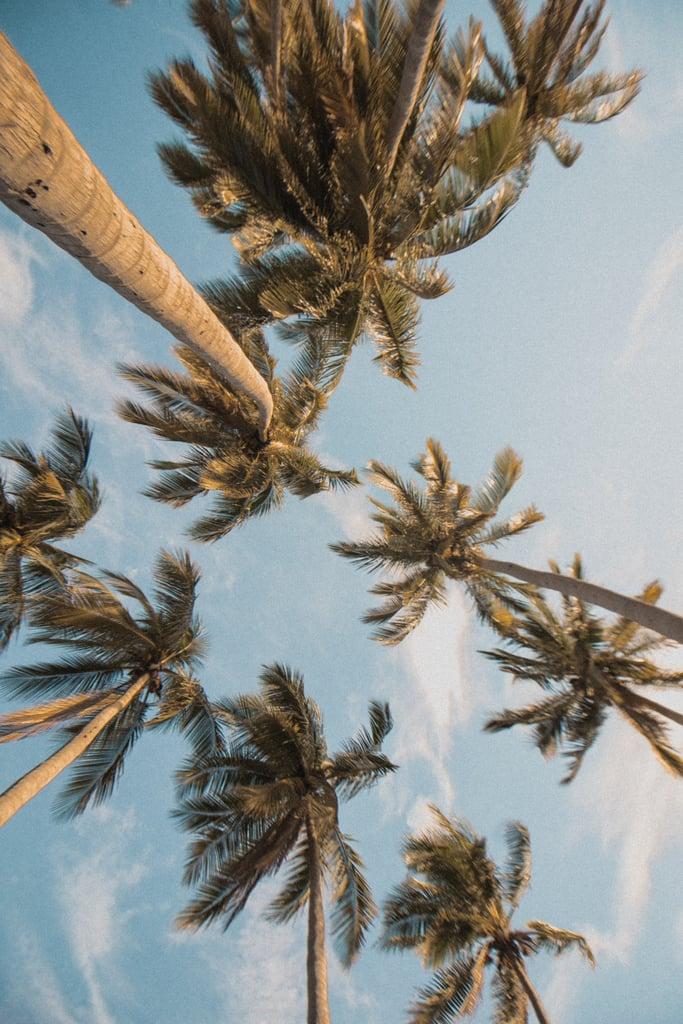 Palm Tree iPhone Wallpaper