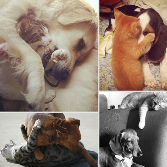 Cute Pictures of Cats and Dogs Playing Together | POPSUGAR ...