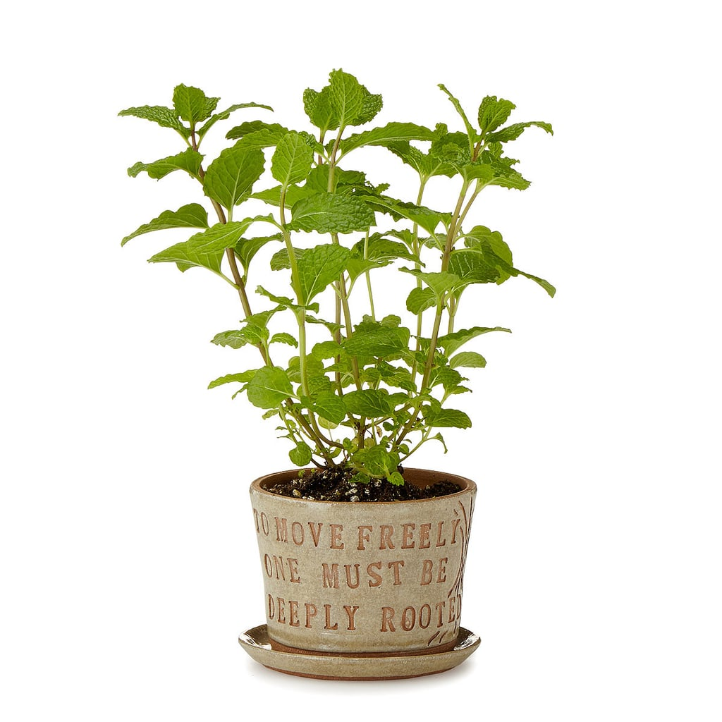 """To Move Freely One Must Be Deeply Rooted"" Planter ($36)"