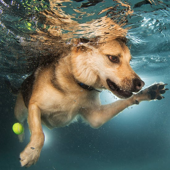 Pictures of Dogs Swimming | Finding Fido