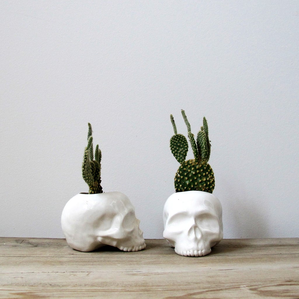 Skull Succulents Pinterest Halloween Decor 2017 Popsugar Home Photo 1